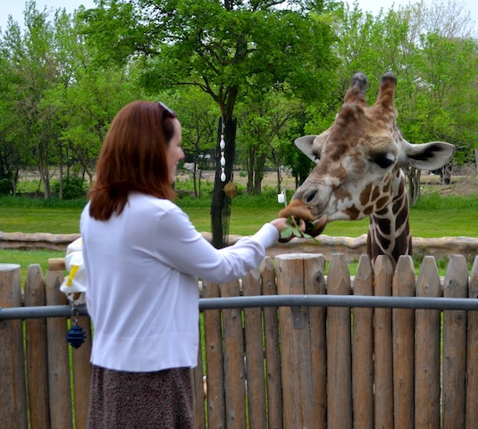 Giraffe Feeding at the Detroit Zoo