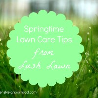 Springtime Lawn Care Tips from Lush Lawn