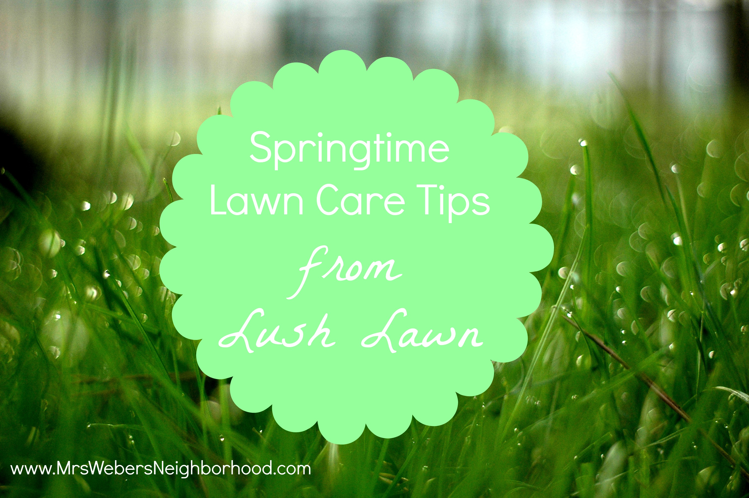 springtime lawn care tips from lush lawn  mrs. weber's neighborhood, Natural flower