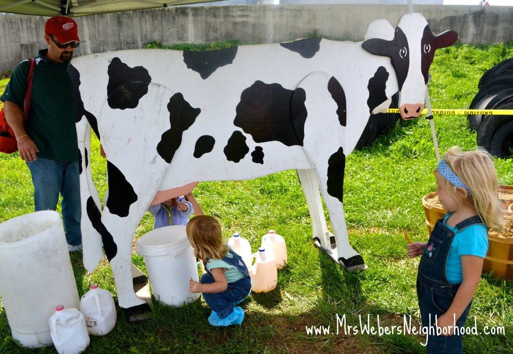 Cow Milking at Breakfast on the Farm