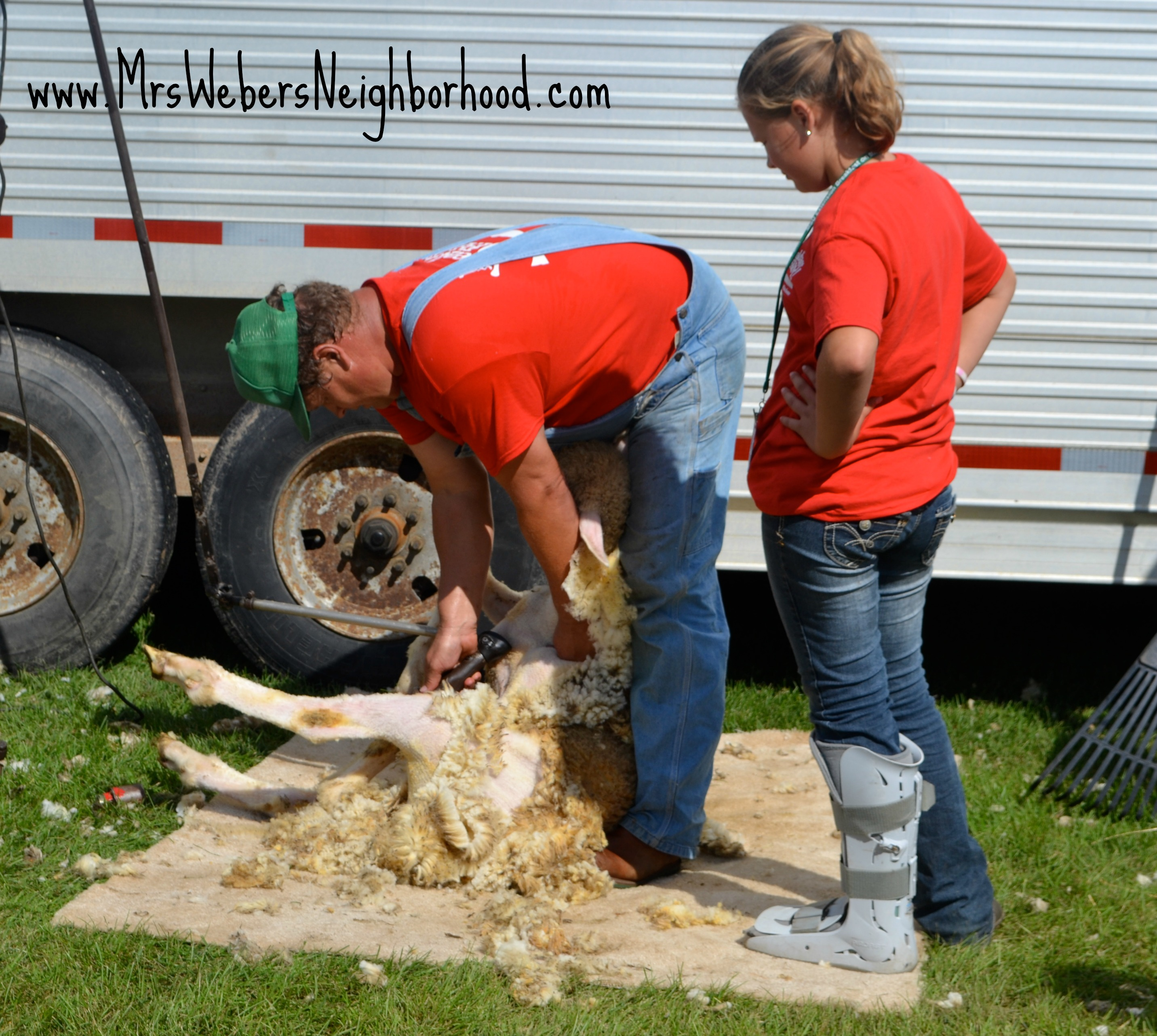 Sheep Shearing at Breakfast on the Farm