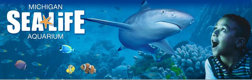 SEA LIFE Michigan Aquarium Update: 120,000 Gallons of ...