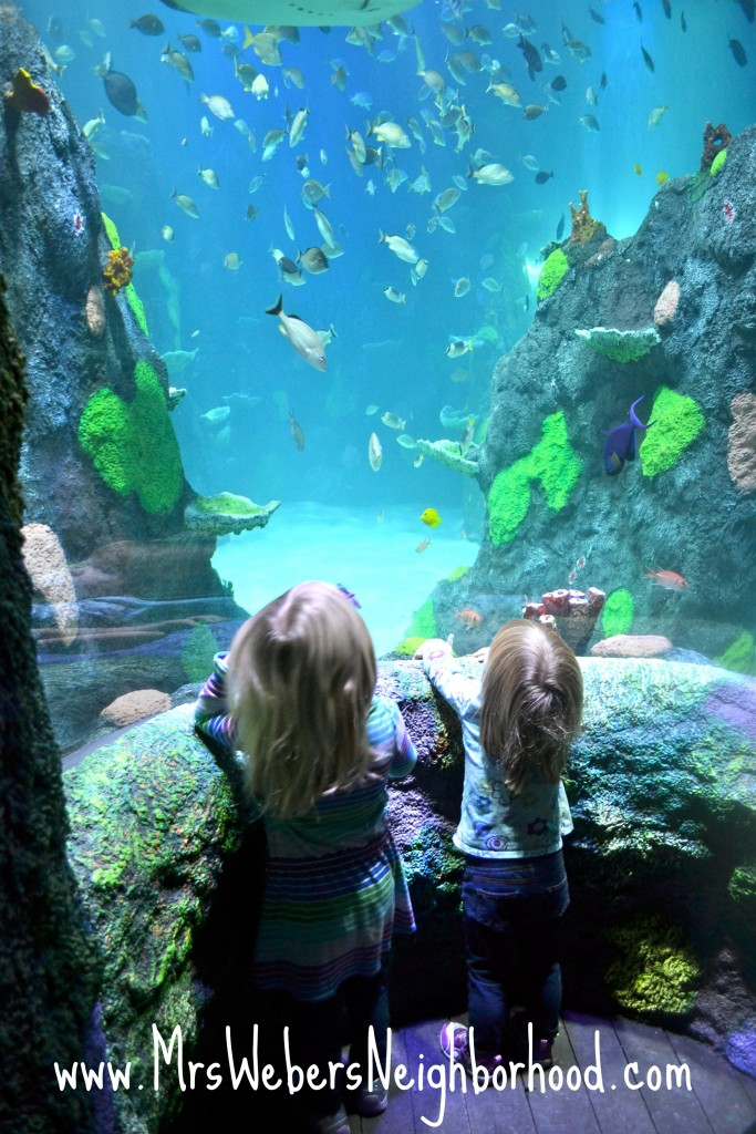 Kids Checking out SEA LIFE Michigan