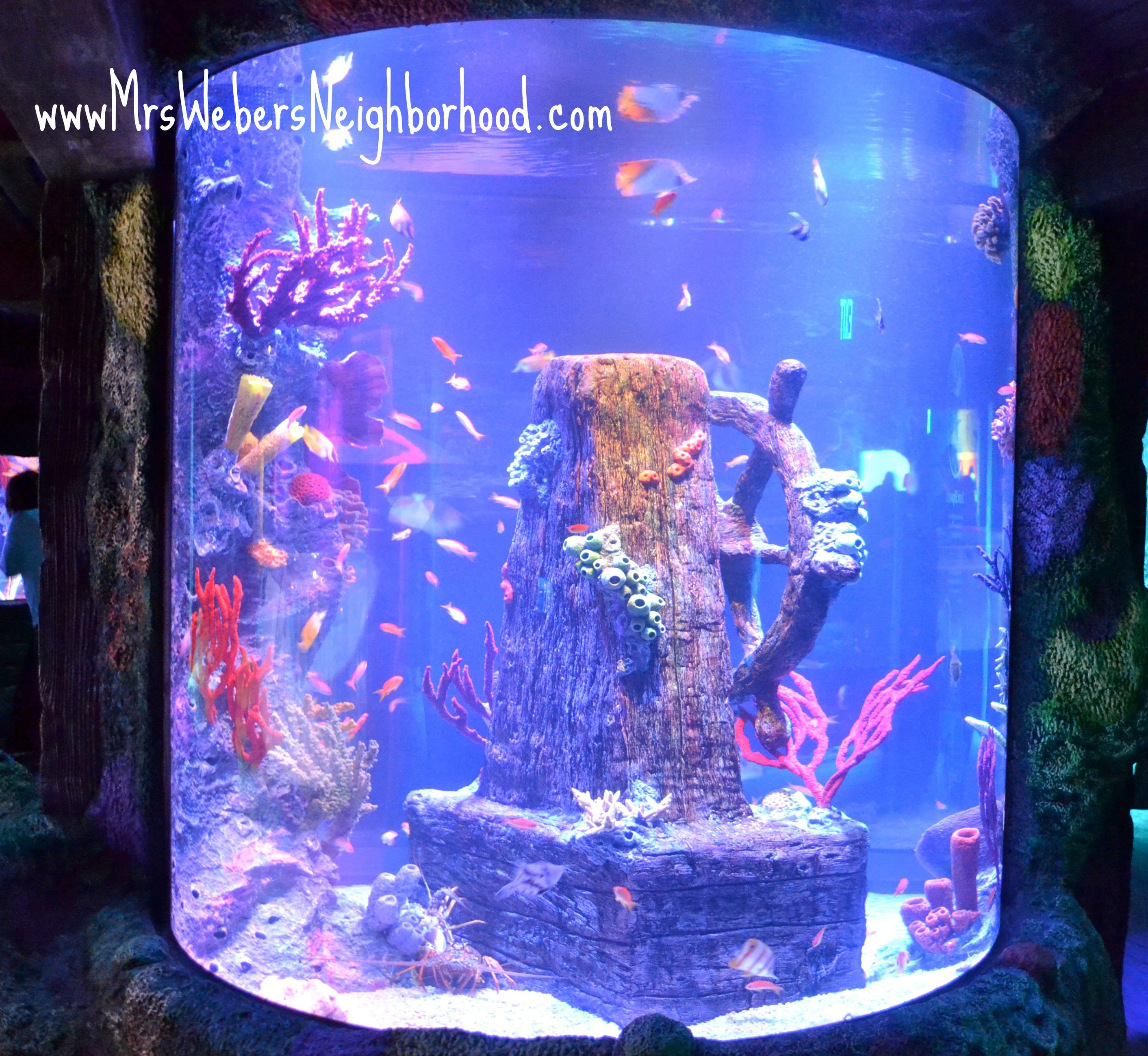 Tips for Visiting SEA LIFE Michigan Aquarium SEALIFEMI Mrs