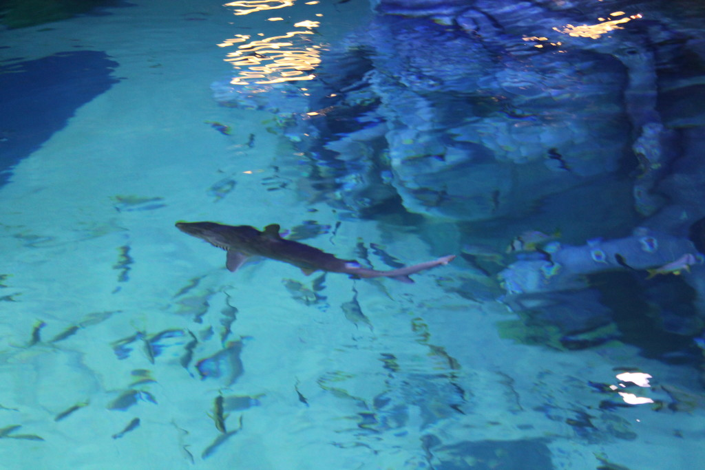 SEA LIFE MIchigan Sharks2