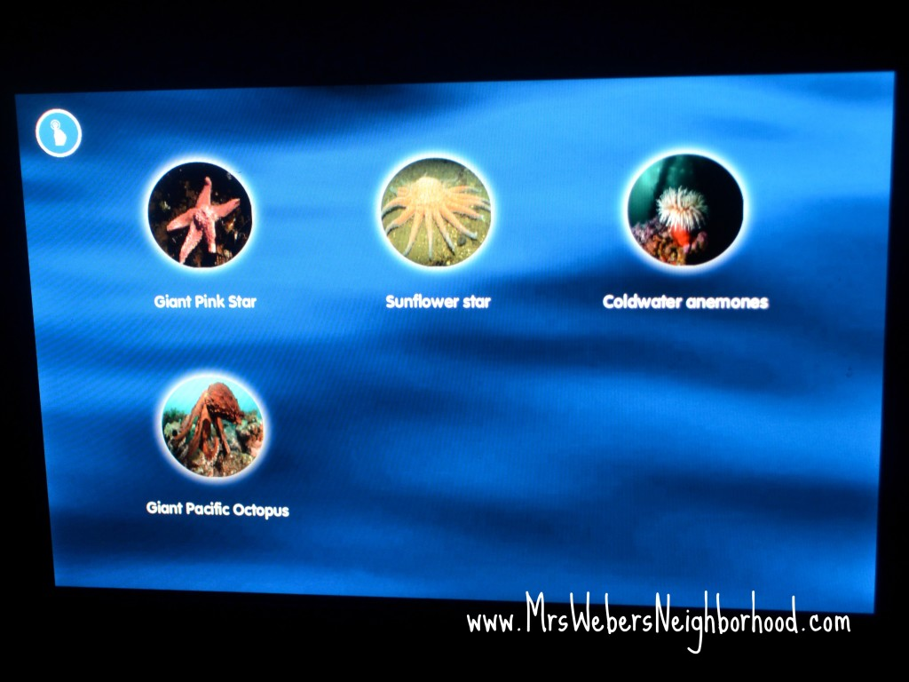 SEA LIFE Michigan Touchscreens