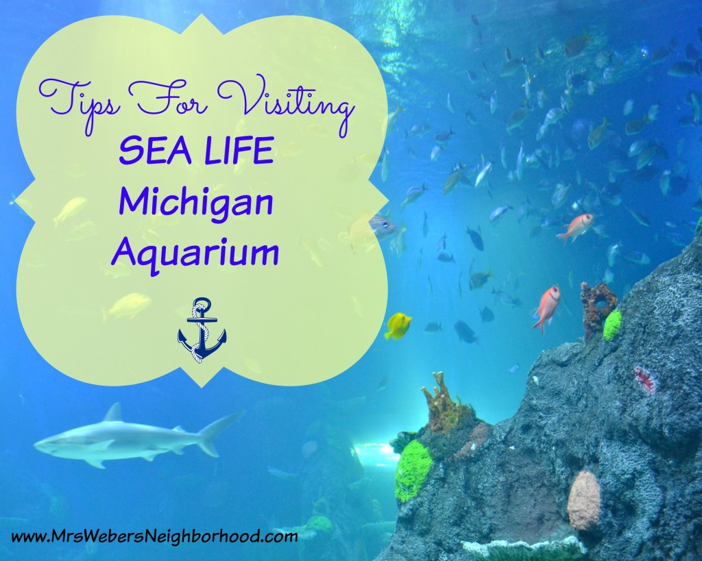 Tips for visiting SEA LIFE Michigan Aquarium