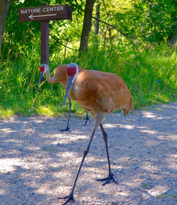 Cranes at Kensington