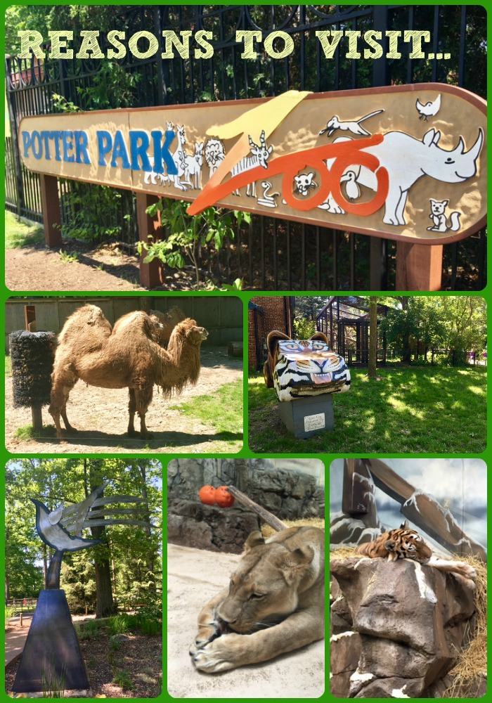 Reasons to Visit Potter Park Zoo