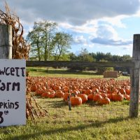 Fawcett Farms and Markillie Orchard in Howell