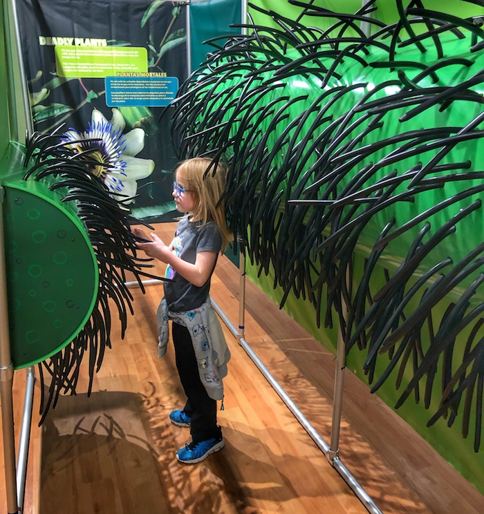 Rainforest Adventure - Sloan Museum