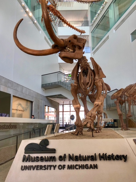 University of Michigan's Museum of Natural History