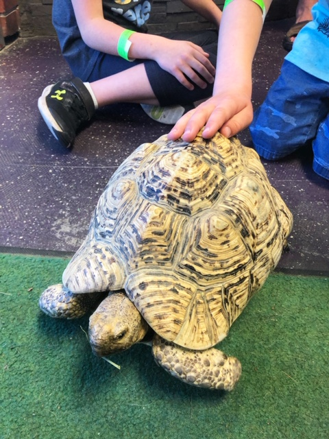 A tortoise named Steve at at The Reptarium in Utica, Michigan